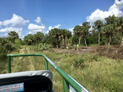 wootens buggy tour florida